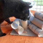 Katzenbeschäftigung...