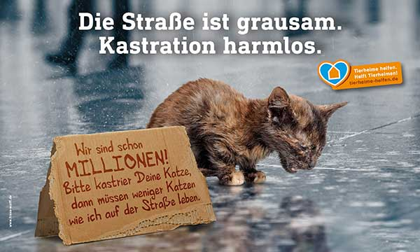 Motiv_Katzenkastration