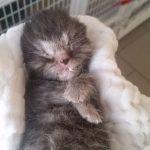 ...schlaf gut, kleiner Engel